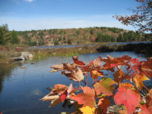 Autumn in Acadia National Park